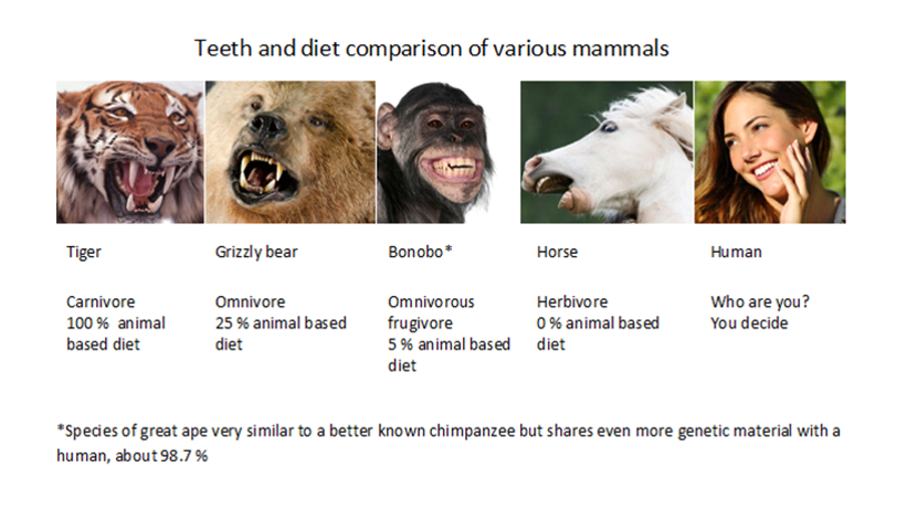 Teeth and diet comparison of various mammals