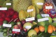 What is a raw food diet - it is a rainbow food - tropical fruits