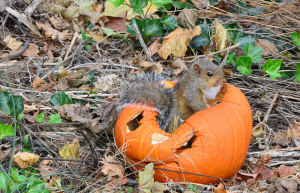 Vitamin A and two best foods for beta-carotene - squirrel