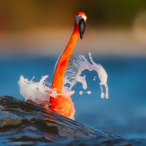 What is astaxanthin? It keeps flamingos nice and vermilion