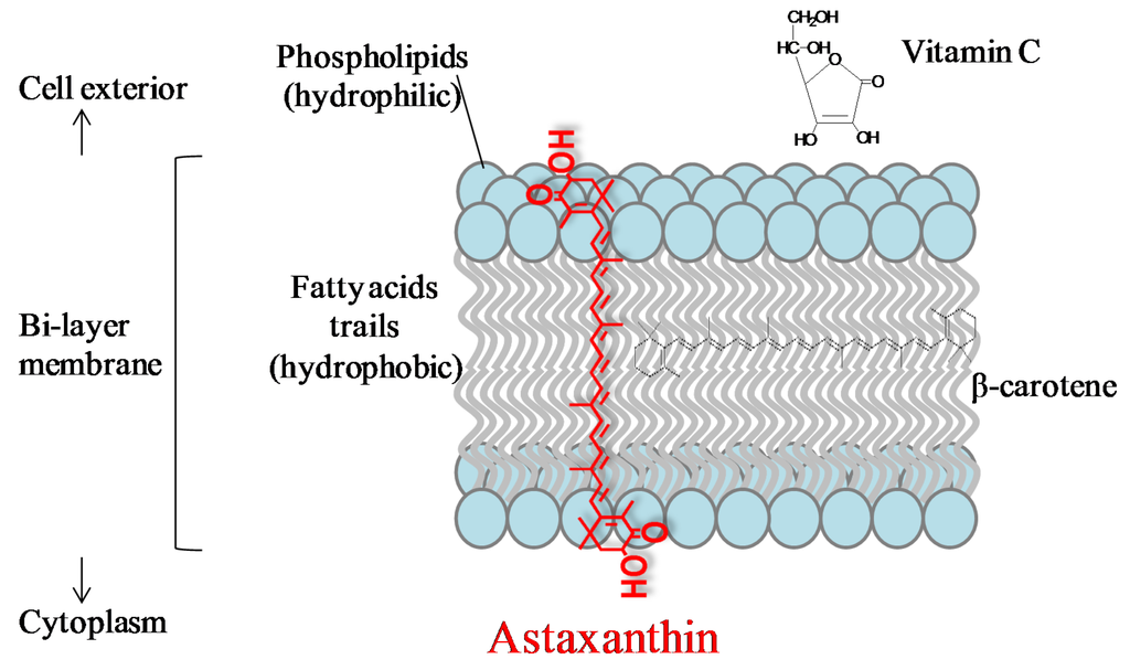 What is astaxanthin - It keeps flamingos nice and vermilion - diagram
