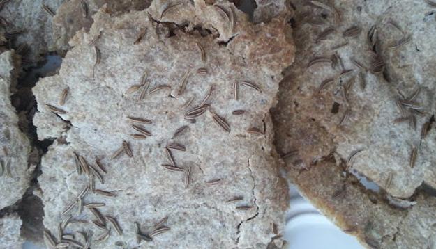 Dehydrated rye bread