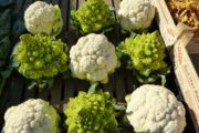 3 nutrients and corresponding raw vegan foods for brain health (to make you smarter) - cauliflower.