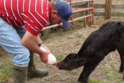 Taking a look at 4 raw vegan research studies (2 human + 2 animal)